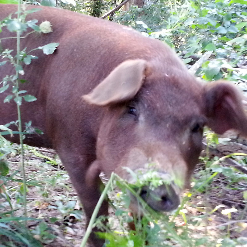 Kraut Creek Natural Feed Company - Non GMO Grains Kraut